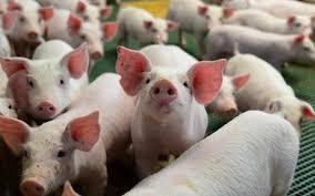 Paraná é o primeiro Estado a ter norma de biosseguridade